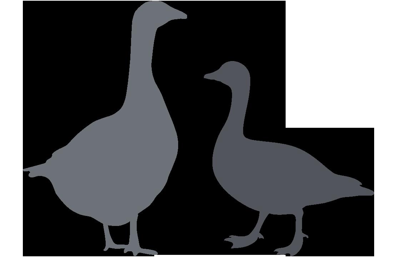 fowl comparison
